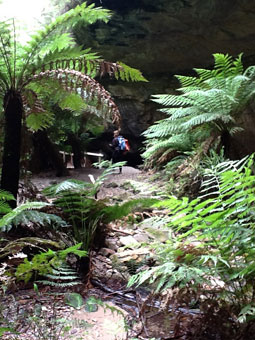 Blue Mountains bushwalks