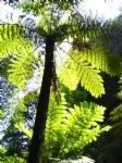 Ancient Rainforests
